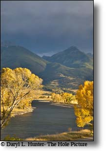 Yellowstone River, autumn, golden cottonwood, thunderstorm,  Paradise Valley, Montana