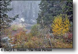 Mill Creek, fall, paradise valley, montana
