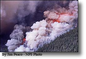 Crown Fire, Yellowstone National Park