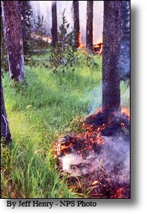 Understroy fire, Yellowstone, 1988