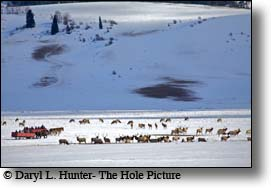 Sleigh Ride, National Elk Refulge, Jackson Hole Wyoming