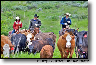 Public Land Ranching