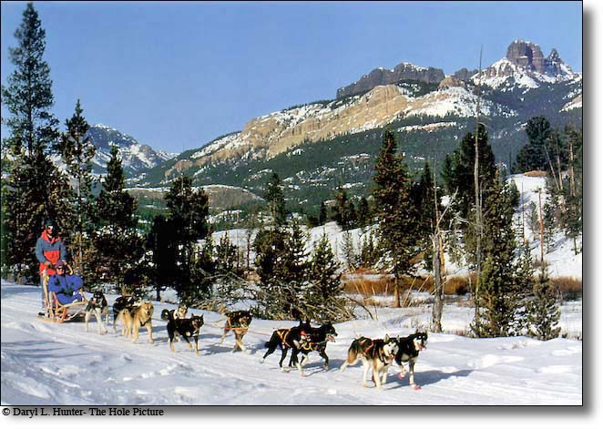 Montana Wyoming And Idaho Dog Sledding Tours And Races
