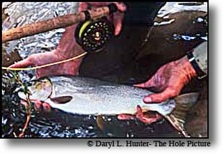 Henry's Fork Cuttroat Trout