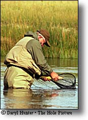 Madison River Fly-fisher releasing trout