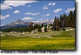 Meadow at Big Sandy, Wind River Mountains, Pinedale Wyoming