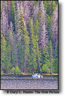 fisherman on Half Moon Lake trolling for Lake Trout