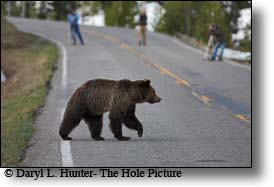 Grizzly Crossing road, north yellowstone