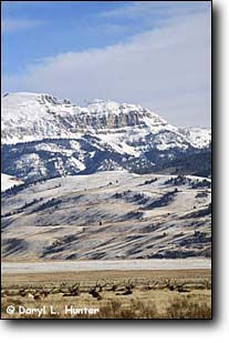 National Elk Refuge, Jackson Hole Wyoming