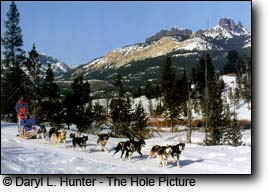 dogsledding Absoraka Mountains, Dubois Wyoming